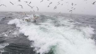 """Wieje. Nad morzem możliwy sztorm, w całym kraju odczucie """"jesiennej temperatury"""""""