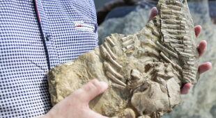 Fragmenty szkieletu proneustikozaura (PAP/ Dominik Gajda)