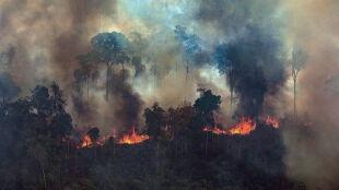 """""""Płonąca Amazonia to sygnał alarmowy dla nas wszystkich"""""""
