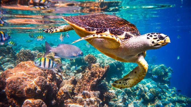 Wielka Rafa Koralowa zdrowieje. <br />Optymistyczne wieści od naukowców